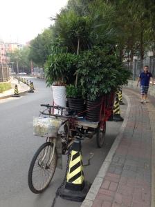 le vendeur de plantes