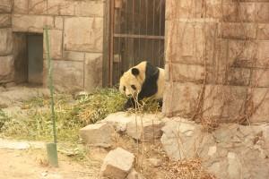 04_panda2