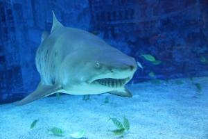 16_requin
