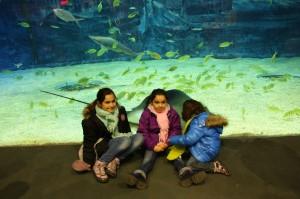 18_aquarium
