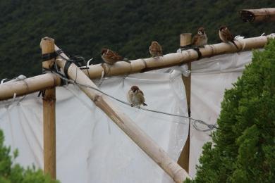 25-Oiseaux 1