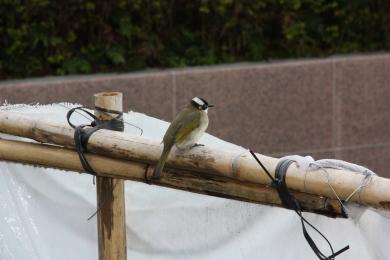 26-Oiseaux 2
