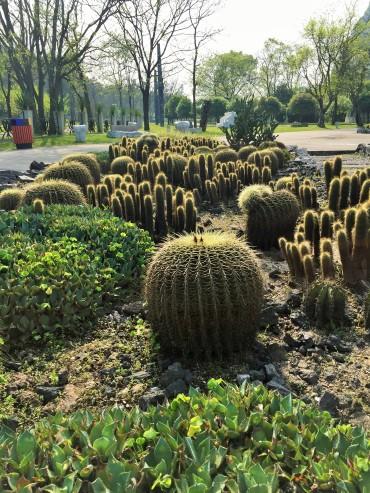 07-Cactus