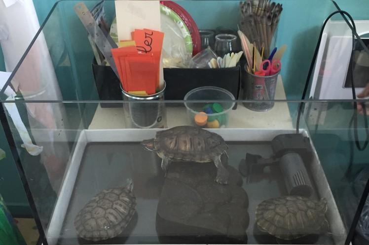 0-Bye turtles